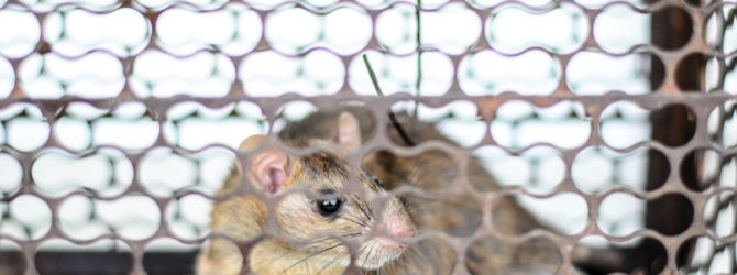 Keeping Pests Out of Your HVAC System